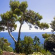 Beautiful park ashore Mediterranean — Stock Photo