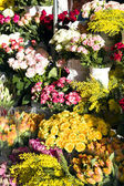 Floral market before spring holidays — Stock Photo