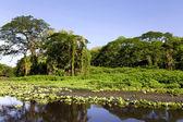 Wonderful landscape of coastline of lake Nicaragua — Stock Photo