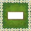 Abstract musical background with garland of snow-white daisies — Stock Photo