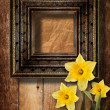 Old wooden frame for photo with bunch of flower narcissus — Stock Photo