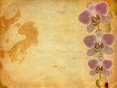Antigua postal de felicitación o invitación con una rama de la p — Foto de Stock
