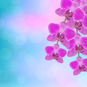 Beautiful pink orchid branch on an abstract background of a deli — Stockfoto