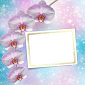 Beautiful pink orchid branch on an abstract background of a deli — Стоковое фото