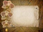 Gamla vykort för gratulationen eller inbjudan med en gren av p — Stockfoto