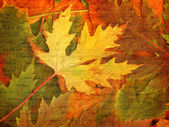 Beautiful backdrop of fallen autumn leaves for design — Stock Photo