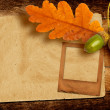 Old grunge slide with autumn oak leaves and acorns on the abstra — Stock Photo