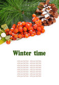 A twig of mountain ash and pine branch with cone on snow backgro — Stock Photo