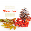 A twig of mountain ash and cone on snow background — Stock Photo