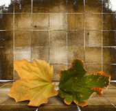 Bright autumn leaves on the wooden background — Stock Photo
