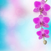 Beautiful pink orchid branch on an abstract background of a deli — Stock Photo