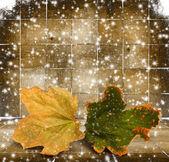 Ljusa höstlöv på trä bakgrund — Stockfoto