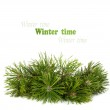 Christmas pine tree branch isolated on a white background — Stock Photo