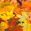 Foto Stock: Bright and colorful background of fallen autumn leaves