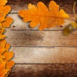 Stock Photo: Old grunge paper with autumn oak leaves and acorns on the abstra