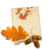 Old grunge paper with autumn oak leaves and acorns on the white — Stock Photo
