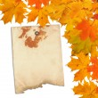 Stock Photo: Old grunge paper with autumn maple branch leaves on the white b