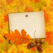 Old grunge paper with autumn oak leaves and acorns on the abstra — Stock Photo #33819767