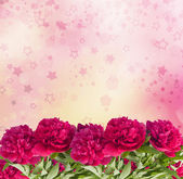 Beautiful bouquet of pink peonies on the abstract background wit — Stock Photo