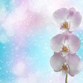 Güzel pembe orkide Şubesi — Stok fotoğraf