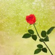 Stock Photo: Red roses on window with raindrops