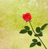 Red roses on the window with raindrops — Stock Photo