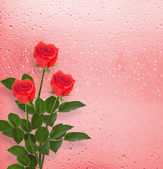 Red roses on the window — Stock Photo
