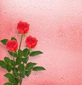 κόκκινα τριαντάφυλλα στο παράθυρο — Φωτογραφία Αρχείου