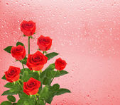 Red roses over window with raindrops — Stock Photo