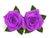 A couple gift roses on valentine day — Stock Photo
