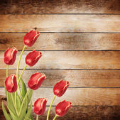 Tulips with green leaves — Stock Photo