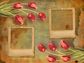 Red rulips and frames — Stock Photo