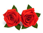 A couple gift roses on valentine day isolated on white backgroun — ストック写真