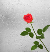 Bouquet of red roses on the background of a window with raindrop — Stock Photo