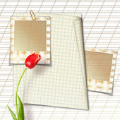 Beautiful red tulip with slides on paper white backg — Stock Photo