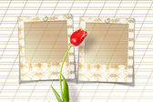 Bouquet of  red tulips with slides — ストック写真