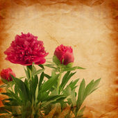 Beautiful bouquet of pink peonies on abstract vintage paper back — Stock Photo