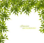 Green leaves frame — Stock Photo