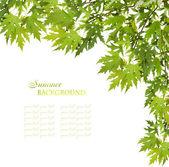 Maple leaves frame — Stock Photo