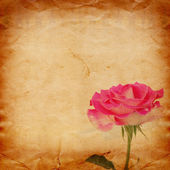 Old vintage card with a bouquet of beautiful pink roses on paper — Stok fotoğraf