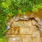 Green foliage on ruined stone wall — Stock Photo