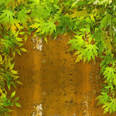 Green foliage on rusty iron wall — Foto de Stock