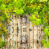 Green leaves on old painted wooden fence — Stock Photo