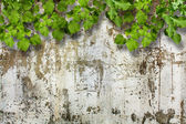 Bright green foliage ruined stone wall — Stock Photo