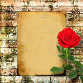 Red rose with green leaves — Stok fotoğraf