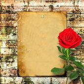 绿色的树叶与红玫瑰 — 图库照片