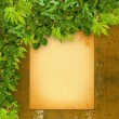 Old paper listing on rusty iron wall with bright green foliage — Stok fotoğraf