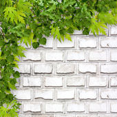 Bright green foliage on background of a white brick wall — Stock Photo