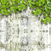 Bright green foliage on background summer ruined stone wall — Stock Photo