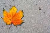 Autumn maple leaf on road — Stock Photo